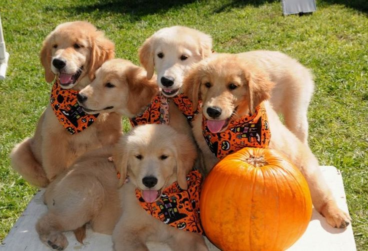 """""""Hey, have you heard? There's talk Halloween may be cancelled this year due 2 scary weather. Oh, no!"""" ~ by BearSpiritDog"""