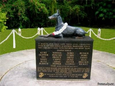 """Памятник Доберману  В конце Второй мировой войны, когда доберманы были официально зачислены в морскую пехоту США, им было присвоено 'звание' """"Semper Fidelis"""" (""""Всегда верный"""")."""