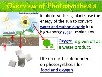 Photosynthesis Complete Unit Plan. This unit has everything that a teacher needs to teach a unit on this topic to Biology or life science students. It covers all topics related to chloroplasts, pigments, light dependent reaction, light independent reaction, and energy transfers. You will receive 15 separate products: A 54 slide powerpoint presentation, teacher notes, student notes, 3 labs, a jeopardy review game, 3 quizzes, 3 homework assignments, a crossword puzzle, and a unit test.