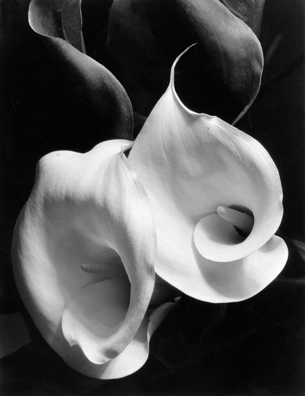 Imogene Cunningham, another fantastic photographer and contemporary of Ansel Adams and Edward Weston