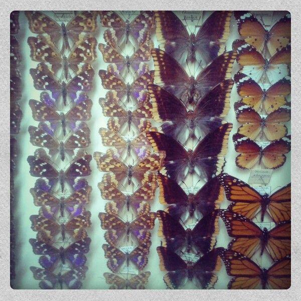 Zbírkeli a motýlů