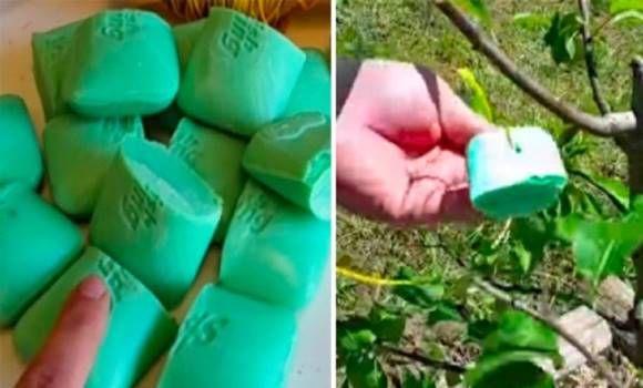 Egy nő zsákba tette a szappant és felakasztotta a kertben. Az eredmény nagyon megtetszett!