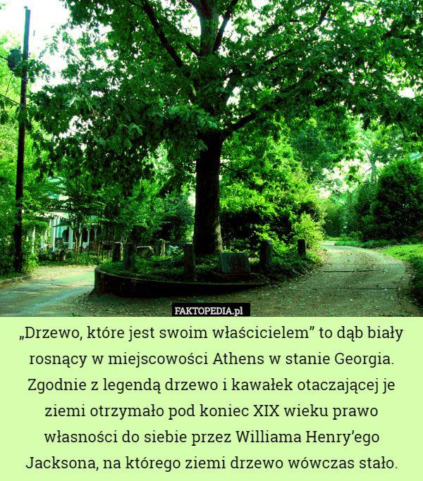 """""""Drzewo, które jest swoim właścicielem"""" to dąb biały rosnący w miejscowości"""