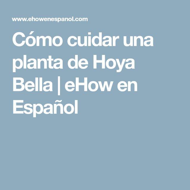 Cómo cuidar una planta de Hoya Bella | eHow en Español