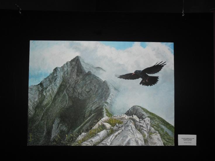 Alpine Chough on Apuane Alps, Tuscany