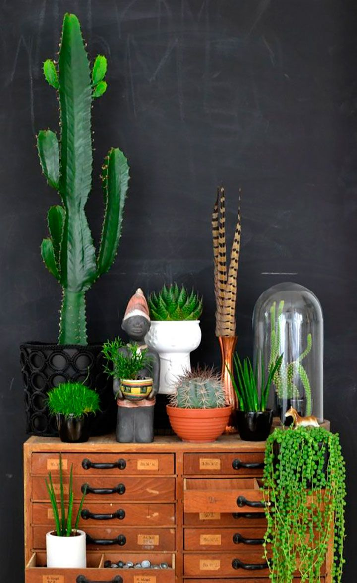 O charme dos cactos no décor: https://www.casadevalentina.com.br/blog/CACTUS%20NO%20D%C3%89COR -----------------------------------------  The charm of cacti in the décor: https://www.casadevalentina.com.br/blog/CACTUS%20NO%20D%C3%89COR