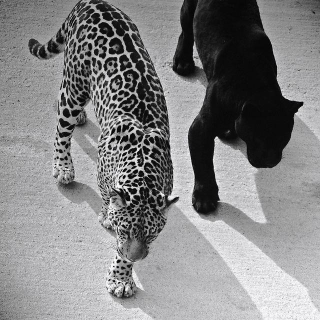 Pin Oleh Cida Di Animals With Attitude Binatang Binatang Lucu Ilustrasi Karakter