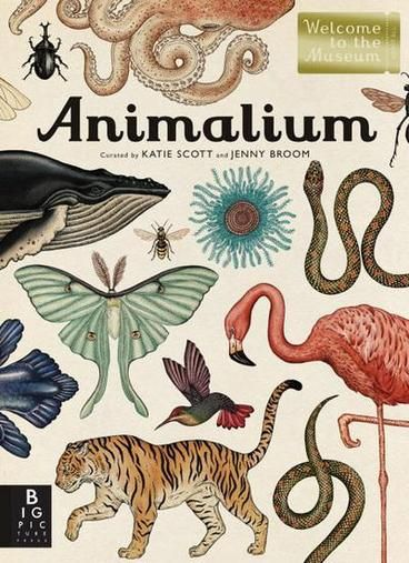 Animalium: Jenny Broom (Welcome to the Museum) by Jenny Broom. Showcases dozens of full-color animal specimens from around the world in a gallery format, complemented by indentification information and brief descriptions.
