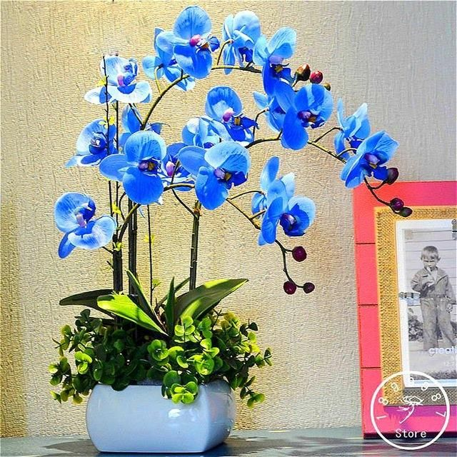 100 Pc Orchid seeds Flower seeds perennial indoor plant Orchid Bonsai seeds