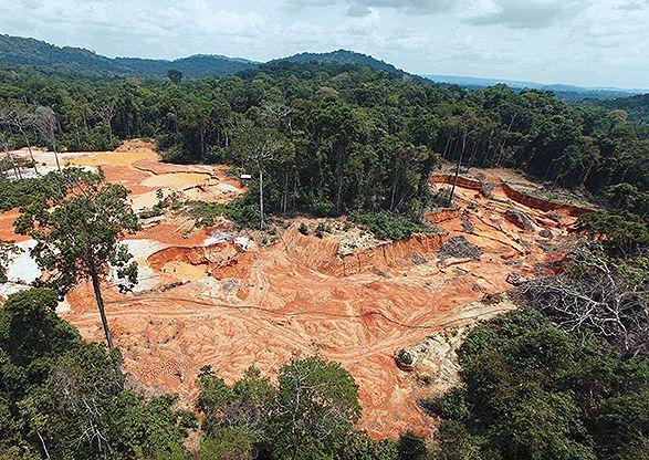 Las preocupantes cifras de deforestación en Colombia.