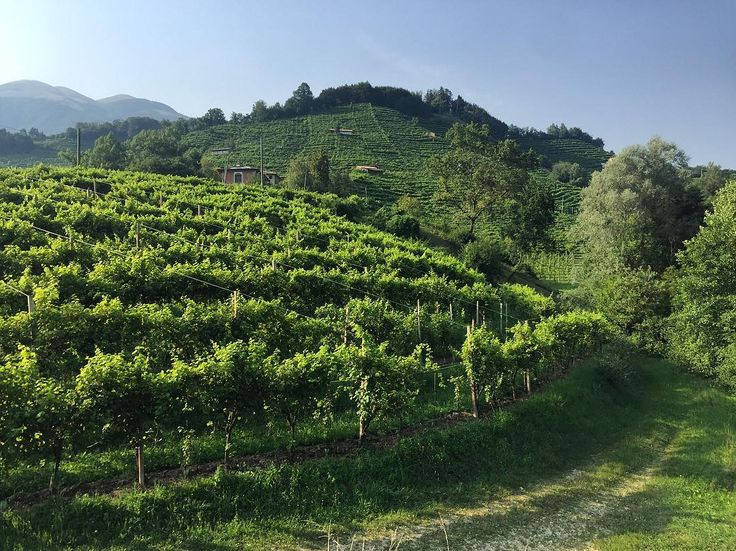 Prosecco Superiore vineyards - via Instagram
