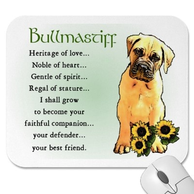 Bullmastiffs are the sweetest dogs.