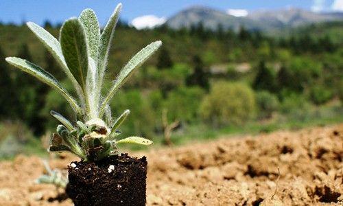 Θαύματα από τα αρωματικά φυτά στον κήπο σας