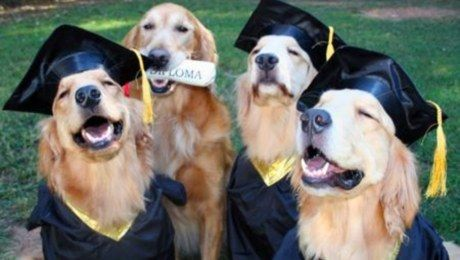 So excited for college. COLLEGE. | Community Post: 60 Times Golden Retrievers Were So Adorable You Wanted To Cry