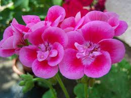 88 best images about plantas y flores on pinterest un for Cuales son las plantas ornamentales