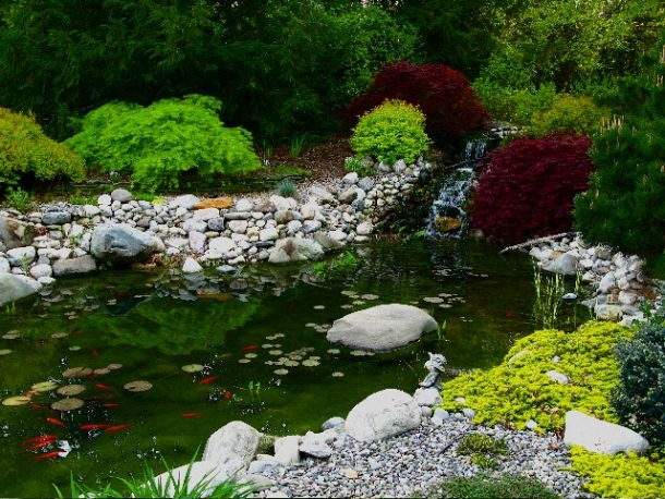 high definition photo of a pond we built | Backyard ...