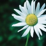 Photo of the Day | March 27 | Daisy, by Ronnie Glover: Amaging Photos, Amaging Pins, Creative Photography, Beautiful Pictures, Photography Pins, Favorite Flower