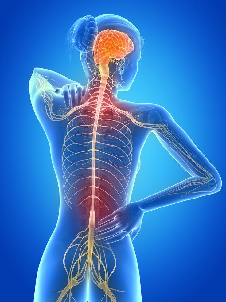 multiple sclerosis skeleton