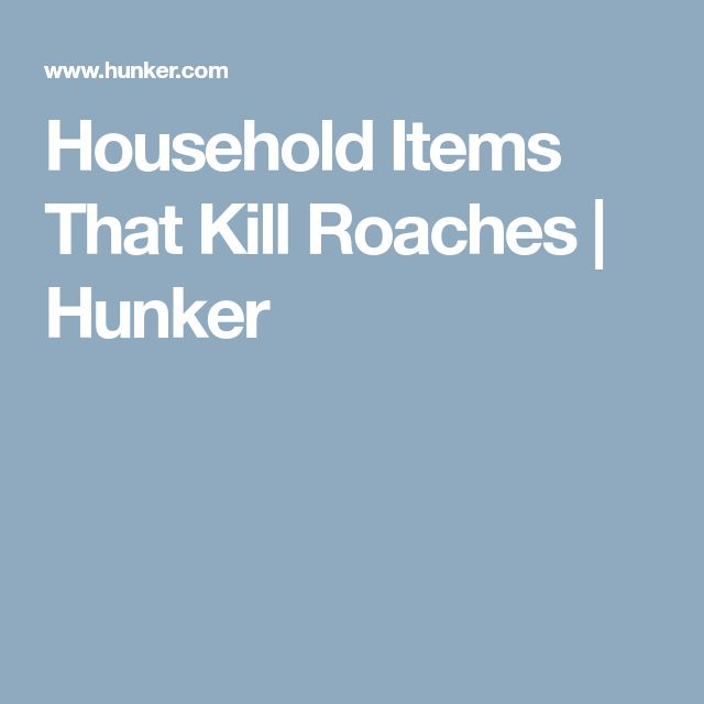 Household Items That Kill Roaches | Hunker