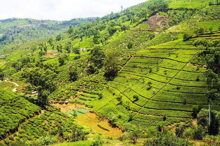 Beautiful nature - Sri Lanka - http://www.travelmoodz.com/en/destination/sri-lanka