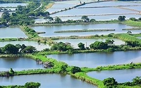 Fish farm monitoring in Vietnam by controlling water quality in ponds and tanks