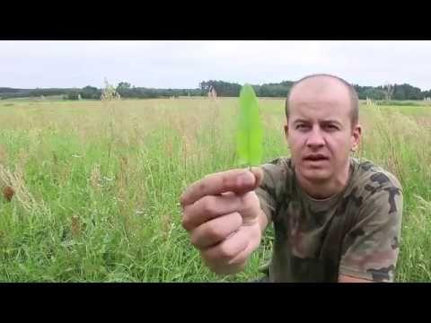 Szczaw - zastosowanie - YouTube