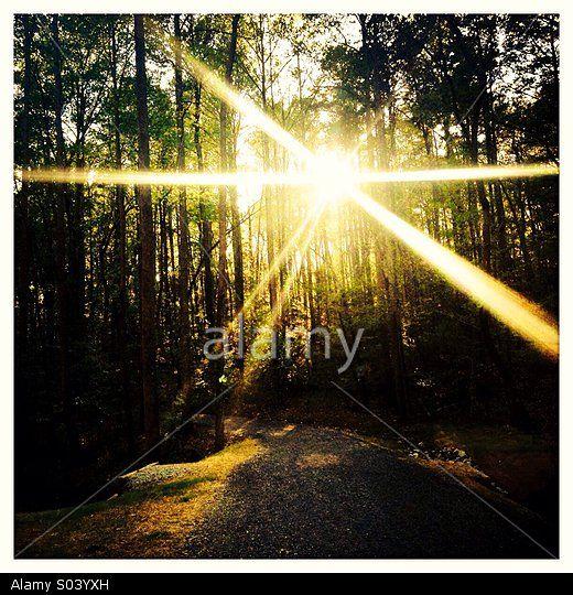 Sunlight coming through trees in the woods © John Davidson / Stockimo / Alamy