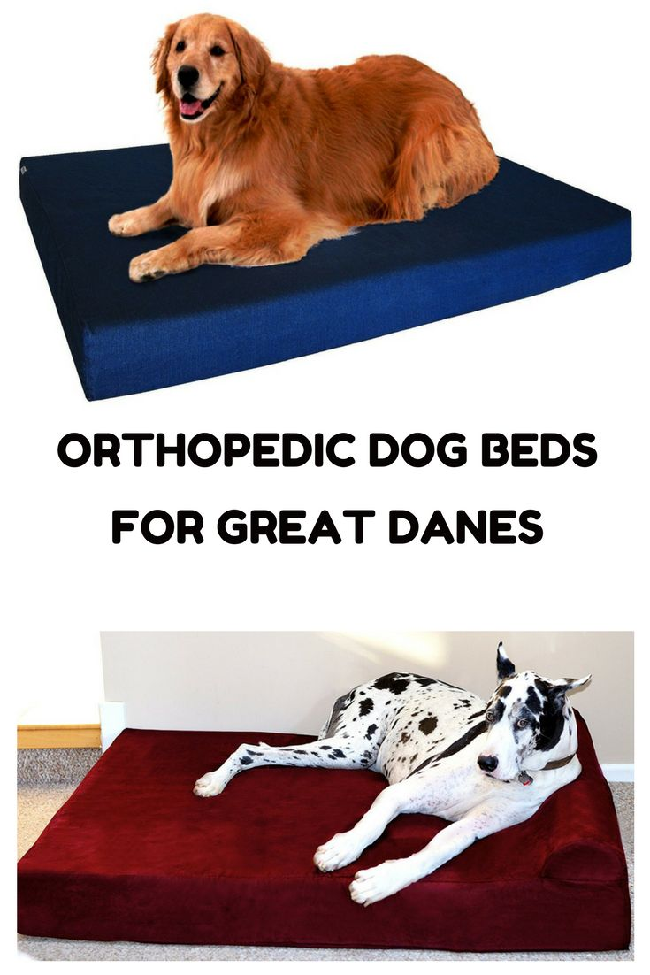 An orthopedic dog bed can improve the quality of sleep your Great Dane gets.