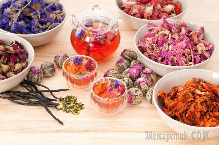 Чай любят и употребляют почти все. Этот напиток обладает тонизирующими свойствами, содержит дубильные вещества, способные подавлять активность болезнетворных микроорганизмов. В последнее время большую...
