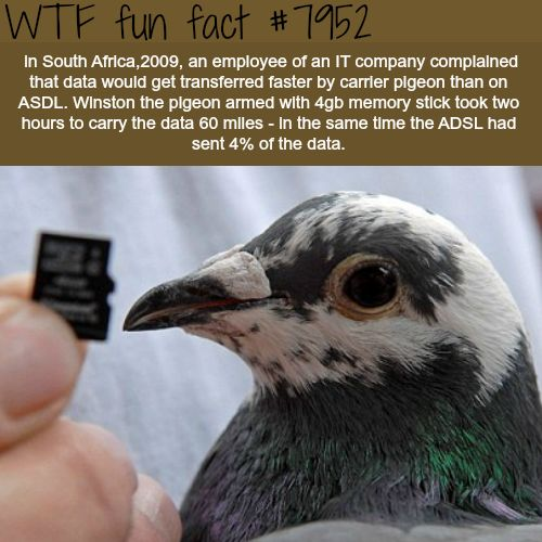 Carrier pigeon faster than carrier ASDL - WTF fun fact