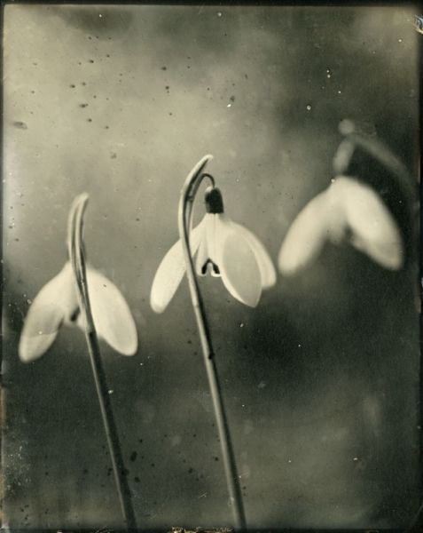 Impermanencia - Isa Marcelli
