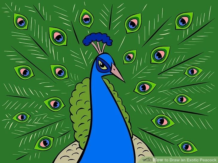 how to draw a peacock realistic