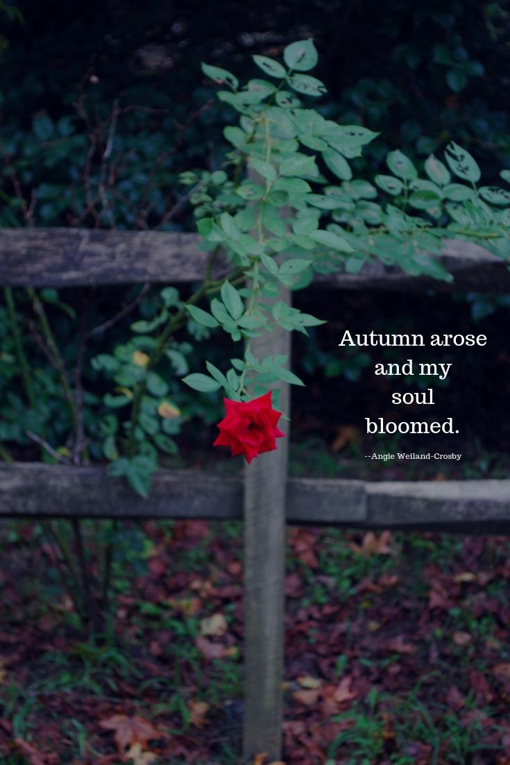 Mom Soul Soothers Quotes Tools And Inspiration For Your Soul Autumn Quotes Autumn Quotes Inspirational Nature Quotes