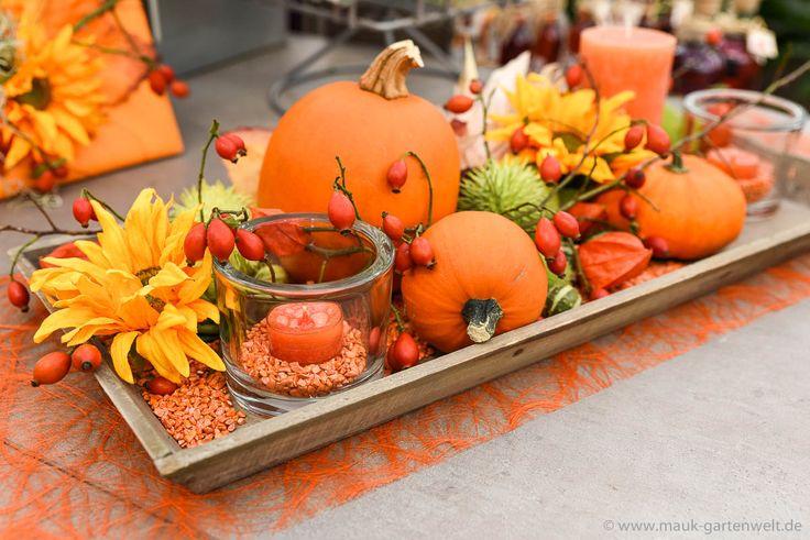 Fertig ist die wunderschöne Herbstdeko! Alle Bestandteile finden Sie in Ihrer Mauk Gartenwelt