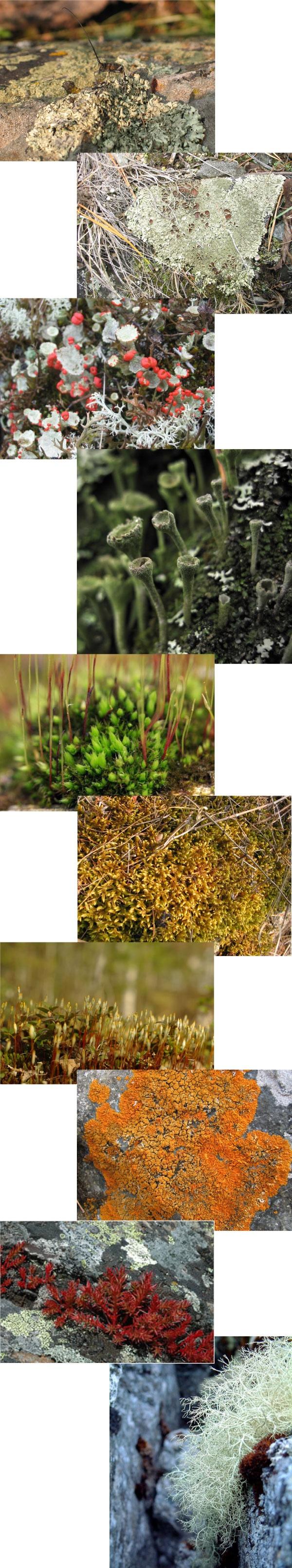 Mosses and lichen?