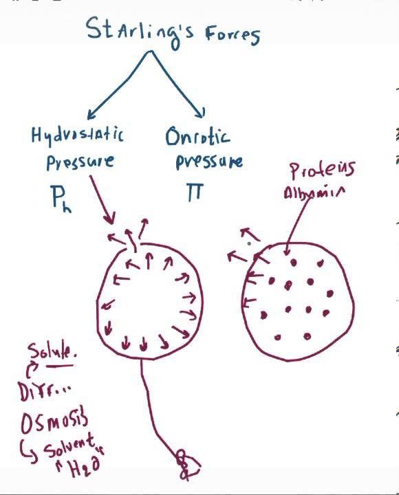 Hydrostatic Versus Oncotic Pressure