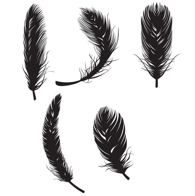 Feather Free Vectors - Free Vector Site | Download Free Vector Art, Graphics