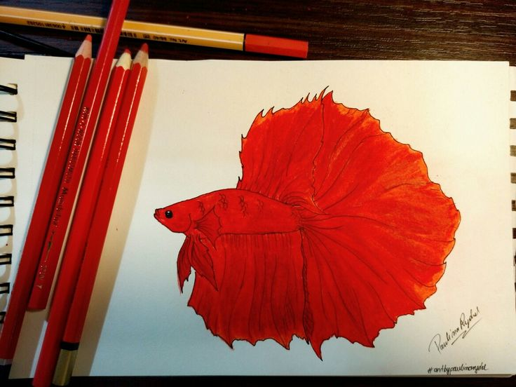 #bettafish #betta #art