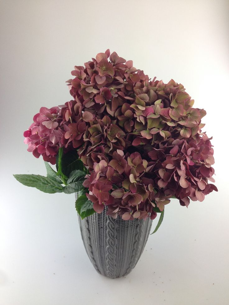 """NYHED EFTERÅR 2015 Hortensia """"Vintage Collection"""" - begrænset mængde.  SCHROLL FLOWERS"""