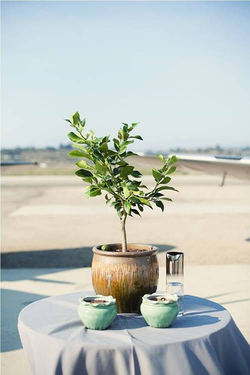 12 Creative Unity Ceremony Ideas Candle Lighting Tree Planting Knot Tying And More