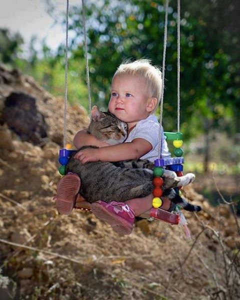 Baby hugging cat on swing