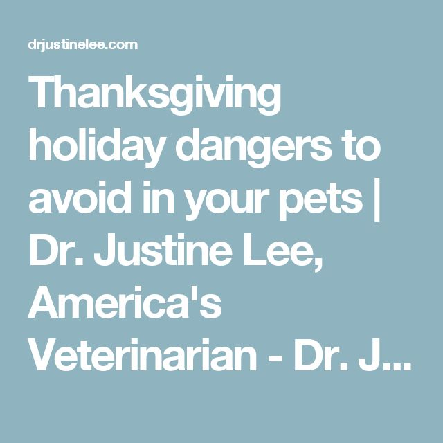 Thanksgiving holiday dangers to avoid in your pets | Dr. Justine Lee, America's Veterinarian - Dr. Justine Lee | Dr. Justine Lee