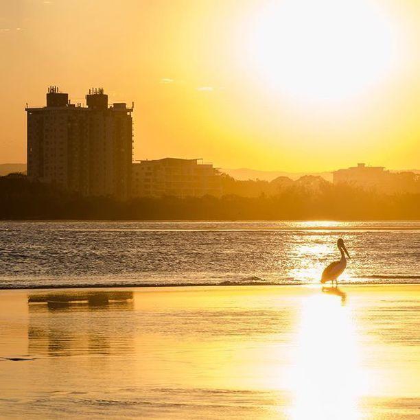 Cotton Tree Beach, Maroochydore, Australia - Waiting, edging closer...