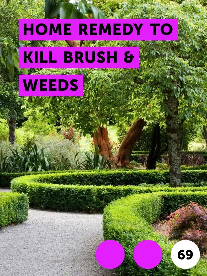 Learn Home Remedy To Kill Brush Weeds How To Guides Tips And Tricks Smoke Tree Desert Willow Plants