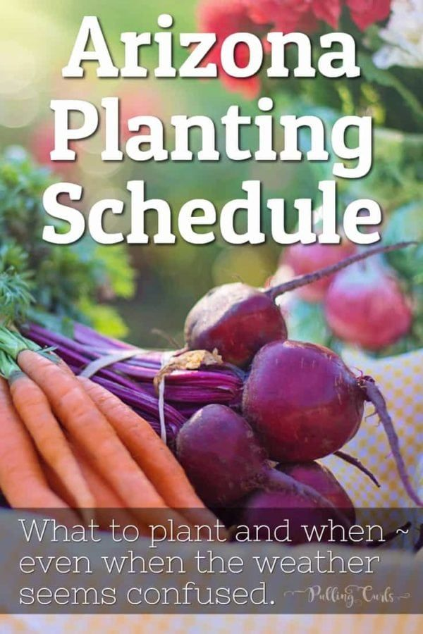 c82de7f495e16ba9f31abbb84e8a0f55 - Gardening In Arizona When To Plant