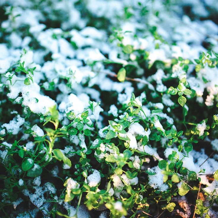 Where allure & distinction meet. Classy & private matching. Exceptional ladies & gents worldwide. http://ift.tt/1O8Pxe2 BBM pin:7F7175A5 W/APP 447789998796 : First Snow! #MissTravel #DateMissTravel #snow #firstsnow #green #fall #winter #holidays #love #nature #weather https://t.co/XZDbya5xdp