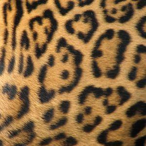 Google Image Result for http://www.sxc.hu/pic/m/f/ft/ftibor/747943_animal_textures.jpg