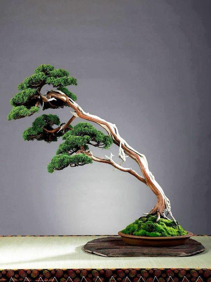 25 einzigartige japanische baum ideen auf pinterest bonsai baum arten bonsai baum und. Black Bedroom Furniture Sets. Home Design Ideas