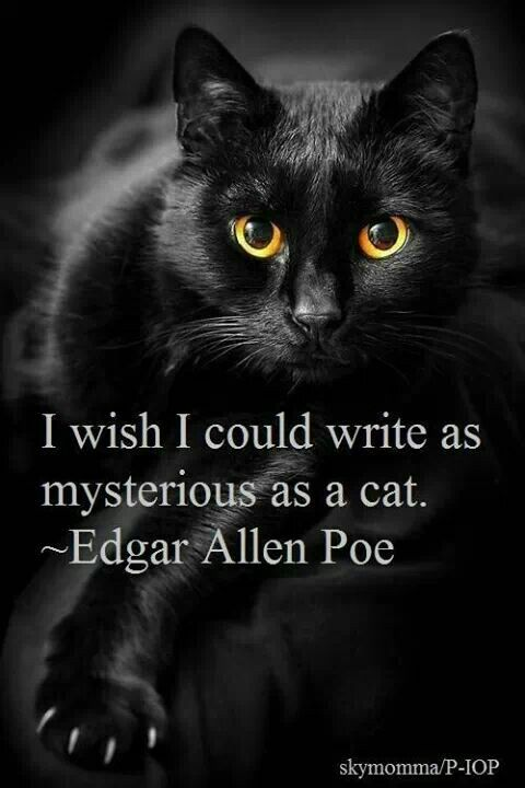 the black cat edgar allan poe analysis essay The black cat is a short story by american writer edgar allan poe it was first published in the august 19, 1843, edition of the saturday evening post it is a study of the psychology of guilt, often paired in analysis with poe's the tell-tale heart in both, a murderer carefully conceals his crime and believes himself unassailable, but.