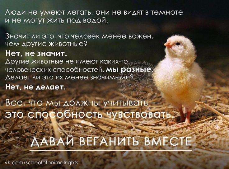 То, что нас объединяет, - важнее различий! - http://veg.1bb.ru/viewtopic.php?id=19#p37